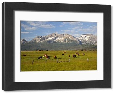 Idaho, Sawtooth National Recreation Area, Grazing cattle, Sawtooth Mountains in background