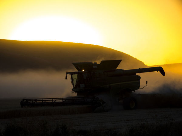 Combine harvesting at sunset
