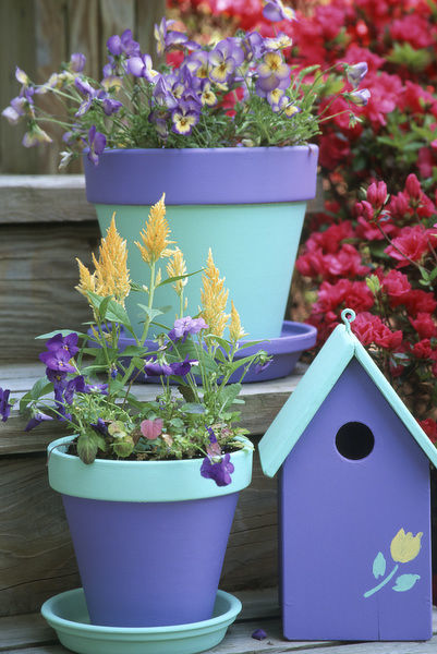 Containers with Sorbet Yellow Delight and Lemon Swirl Violas and Celosia with bird house on steps near Azalea, Marion County, Illinois