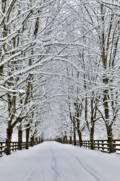 Fresh snow on tree and fence near, town of Snoqualmie