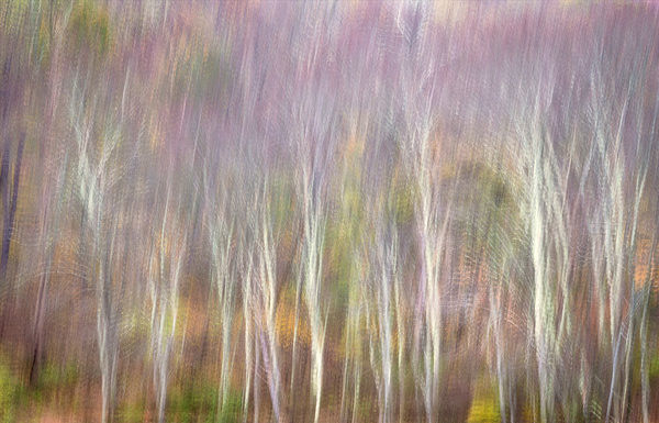 USA, West Virginia, Delaware Watergap Recreational Area. Forest abstract. Credit as: Jay O'Brien / Jaynes Gallery / DanitaDelimont