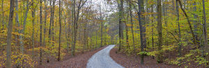 63895-14311 Road through trees in fall at LaRue-Pine Hills, Shawnee National Forest, IL