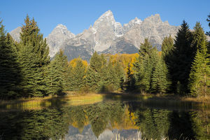 67545-09506 Sunrise at Schwabacher Landing in fall, Grand Teton National Park, WY