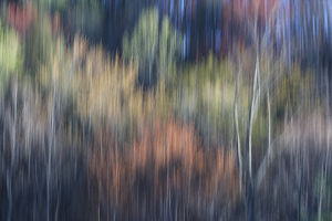 Abstract blur of trees leafing out in Spring, Tennessee