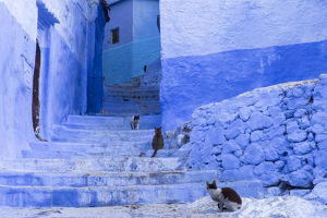Africa, Morocco, Chefchaouen. Cats sit along the winding steps of an alley