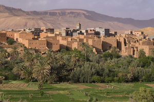 Africa, Morocco. The oasis behind the village of Tinerhir is a rich farming area