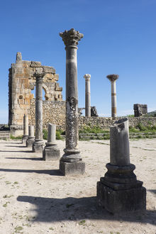 Africa, Morocco. Stone columns and remnants of an arch at the roman ruins of Volubilis