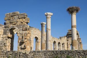 Africa, Morocco, Volubilis. AN archeological site of Roman ruins