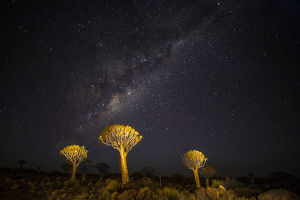 Africa, Namibia, Keetmanshoop. Milky Way over the Quiver tree Forest
