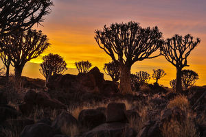 Africa, Namibia, Keetmanshoop, sunset at the Quiver tree Forest at the Quiver tree