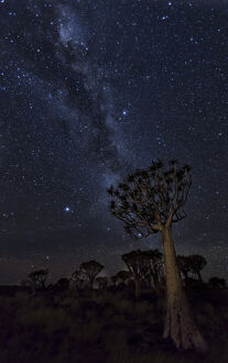 africa namibia milky way quiver trees night