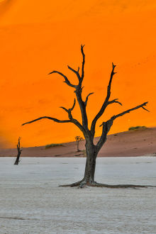 Africa, Namibia, Sossusvlei. Dead Acacia Trees in the White Clay Pan at Deadvlei