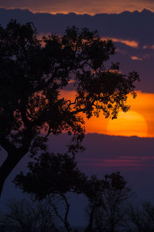 Africa. Tanzania. Colorful setting sun in Serengeti NP