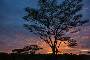 Africa. Tanzania. Morning sunrise at Ndutu in Serengeti NP