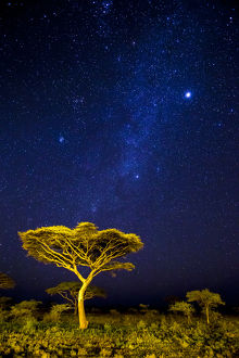 Africa. Tanzania. Stars of the Milky Way illuminate the night sky at Ndutu in Serengetti