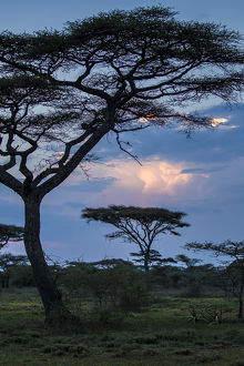 Africa. Tanzania. Thunder clouds lit by evening sun during rain storm at Ndutu Safari