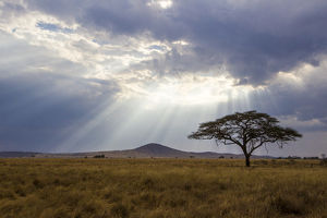 Africa. Tanzania. Views of the savanna in Serengeti NP