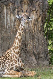 Africa, Zambia, South Luangwa National Park