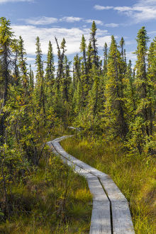 Alaska, Tetlin National Wildlife Refuge. Scenic of Hidden Lake Trail