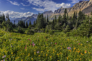 Alpine wildflowers with Garden Wall at Logan Pass in Glacier National Park, Montana, USA