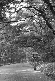 Asia, Japan, Tokyo, Grounds of Meiji Shrine, Black and white image