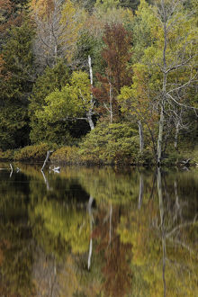 Autumn color reflected on Andrus Lake, Upper Peninsula, Michigan