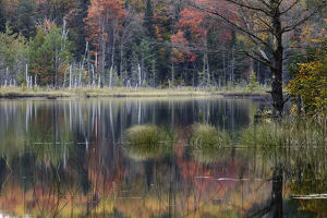 Autumn Colors and mist reflecting on Council Lake at sunrise, Hiawatha National Forest