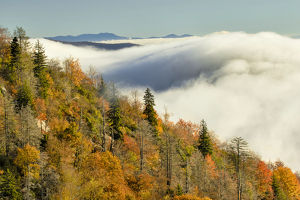 Autumn Colors and mist at sunrise, Blue Ridge Mountains from Blue Ridge Parkway at sunrise