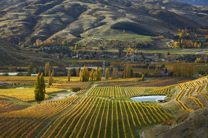 Autumn colours, Felton Road Vineyard, Bannockburn, near Cromwell, Central Otago