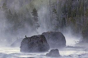 Boulders in early morning mist, Gibbon River, Yellowstone National Park, Wyoming
