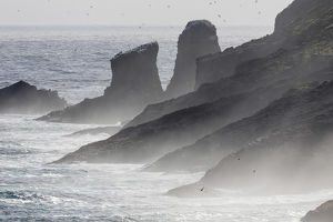 Breakers and spray , the cliffs of Mykinesholmur