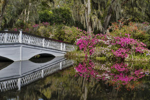 Bridge crossing pond Springtime azelea blooming Magnolia Plantation, Charelston South