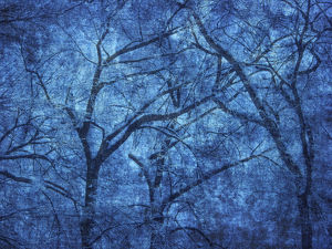 abstract/canada blue abstract trees credit as mike grandmaison