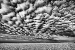 abstract/canada manitoba holland wheat crop cloud