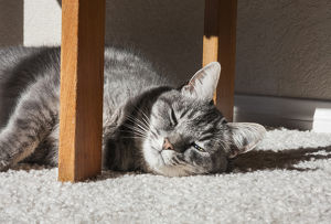 Cat lying in the sun