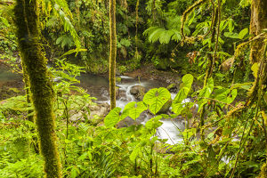 Central America, Costa Rica. Monteve Verde, La Paz River, rain forest Credit as