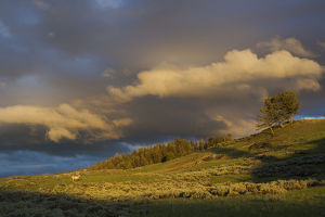 Clearing Thunderstorm; Yellowstone National Park