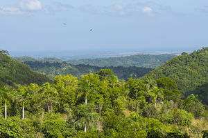 Cuba. Artemisa. Las Terrazas. UNESCO Biosphere Preserve and eco-community in the