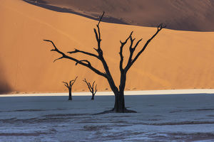 Dead silhouetted trees in Deadvlei, Sossusvlei, Namibia