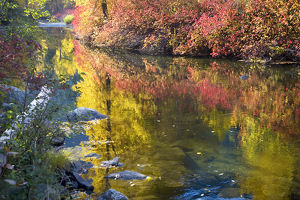 Deep Fall Colors Wenatchee River Stevens Pass Leavenworth Washington