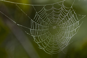 Dew hangs on a spider web with green out of focus background in this photograph taken