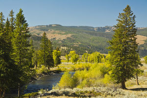 early autumn; Lamar River Valley; Yellowstone National Park; Wyoming; USA