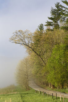 Early morning view of Hyatt Lane, Cades Cove, Great Smoky Mountains National Park