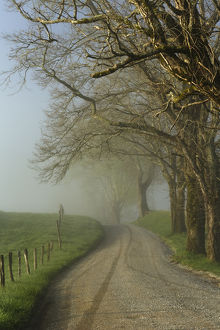 Early morning view of Sparks Lane, Cades Cove, Great Smoky Mountains National Park