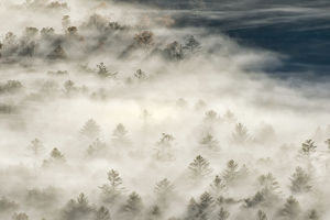 Elevated view of fog filled valley with trees emerging at sunrise, from Pounding