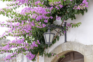 Europe,Portugal, Obidos. Arched doorway with Purple Bougainvillea and wrought Iron