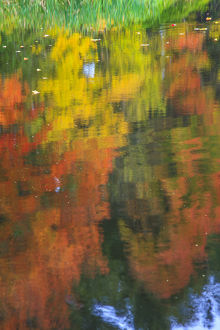 nature/flora/fall colors reflected pond abstract wind blew