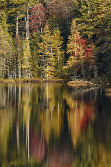 Fall colors along shoreline of Irwin Lake, Hiawatha National Forest, Upper Peninsula