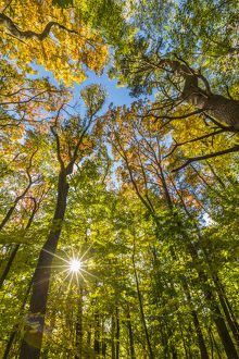 Fall in a forest in Amesbury, Massachusetts