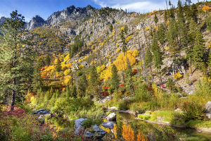 Fall Yellow Red Green Colors Reflection Wenatchee River Reflections Stevens Pass